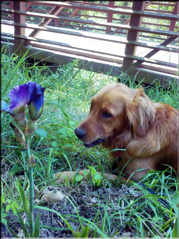 Jazzy Brass & Iris for the Lost