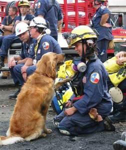 Bretagne: 9/11 Rescue Dog